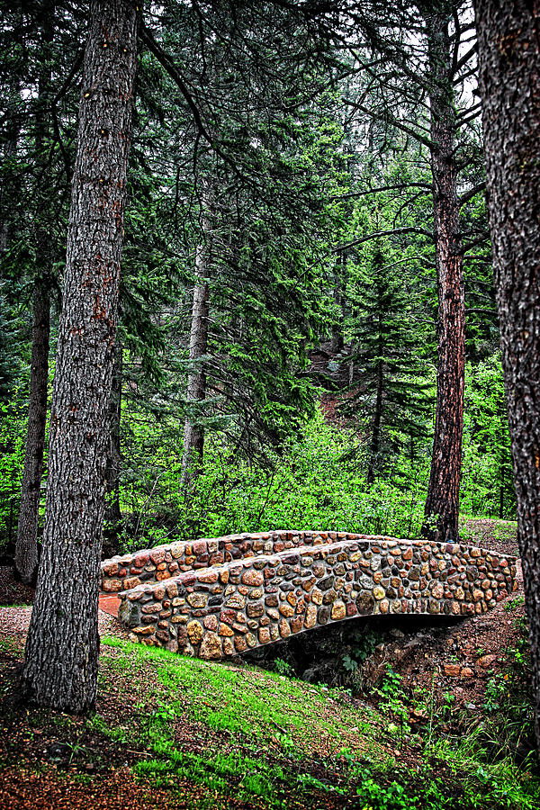 Forest Photograph - A Bridge Through Time by Lincoln Rogers