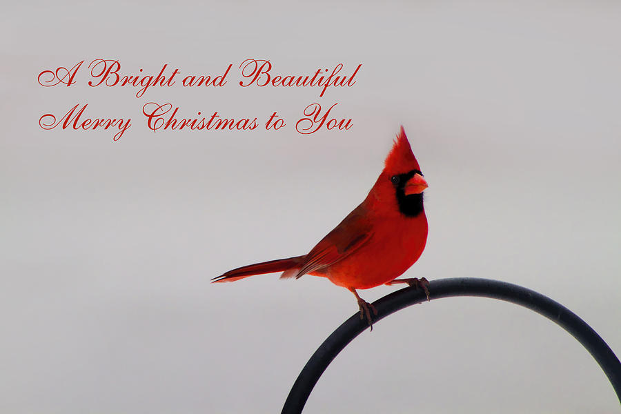 A Bright And Beautiful Merry Christmas To You Photograph