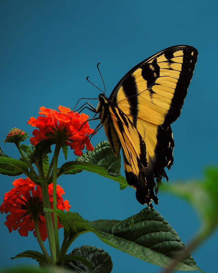A Butterfly Photograph by Raymond Salani III