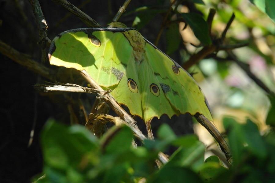 Butterflies Photograph - A Buttterfly Resting by Jeff Swan