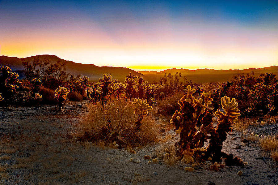 Joshua Tree Photograph - A Cactus Paradise by Aron Kearney