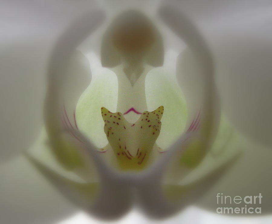 Flower Photograph - A Capella by Tina Marie