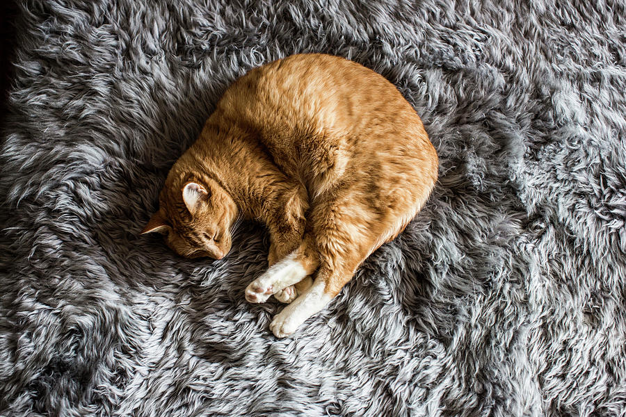 A Cat Napping Photograph by Jordan Siemens