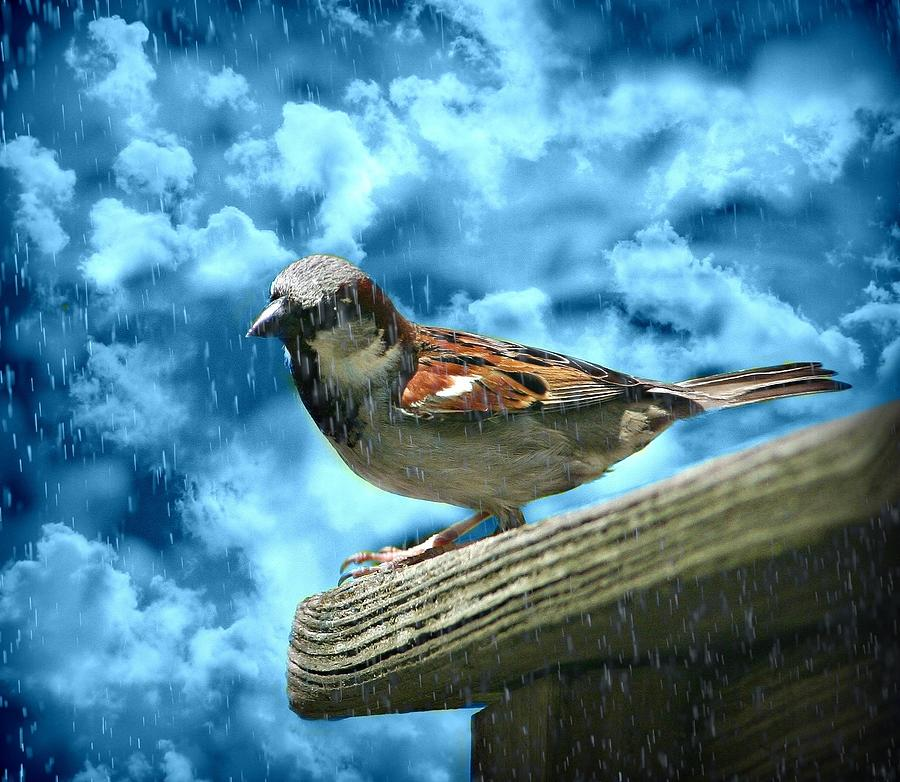 Bird Photograph - A Chance Of Showers by Barbara S Nickerson