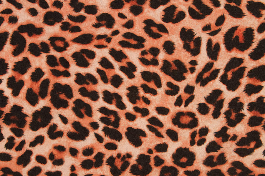 A Cheetah Print Pattern Background Photograph by Jon Schulte