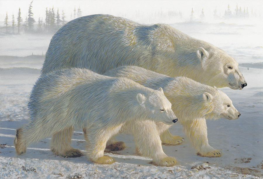 Polar Bear Drawing - A Chill Wind by Brent Ander