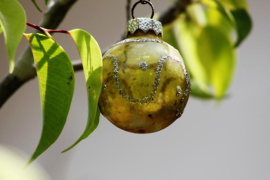 Christmas Ornaments Photograph - A Christmas Ornament Any Tree by Carolina Liechtenstein