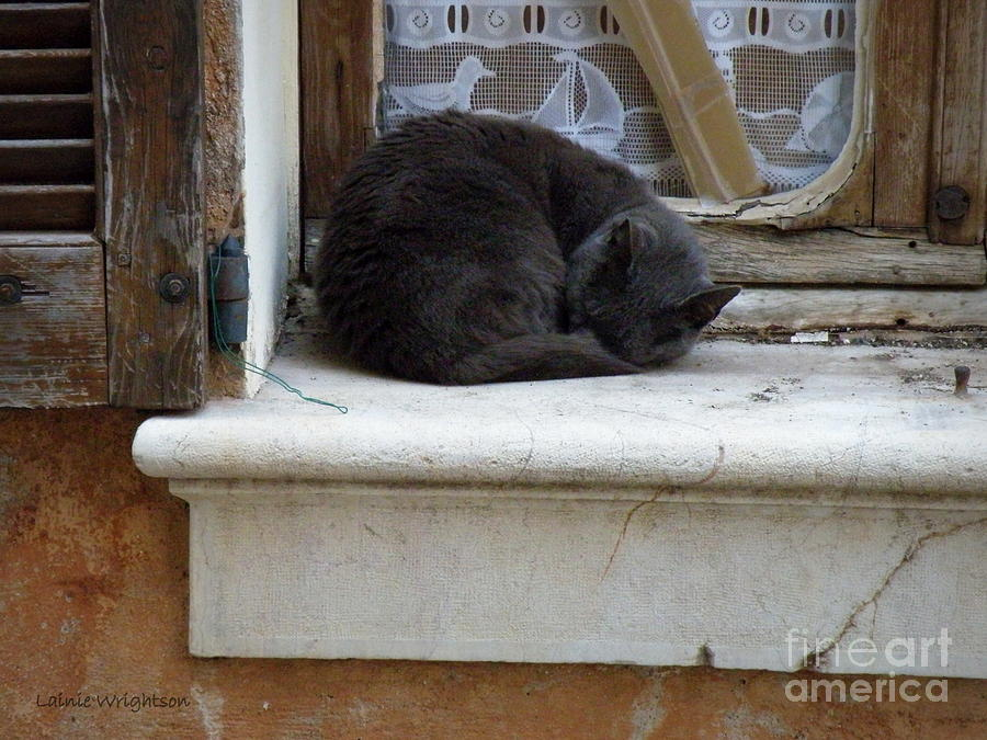 Cat Photograph - A Circled Up Cat  by Lainie Wrightson