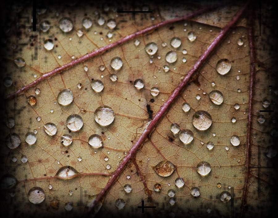 Leaf Photograph - A Close Up Of A Wet Leaf by Andrew Sliwinski
