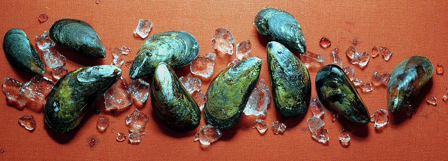 A Cluster Of Mussels Photograph by Romulo Yanes