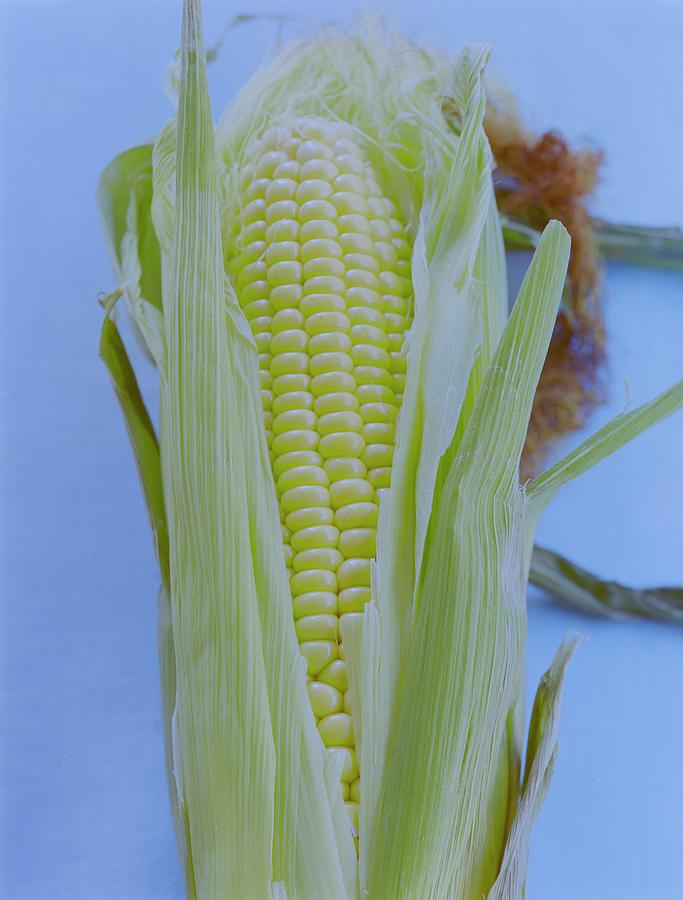 A Cob Of Corn Photograph by Romulo Yanes