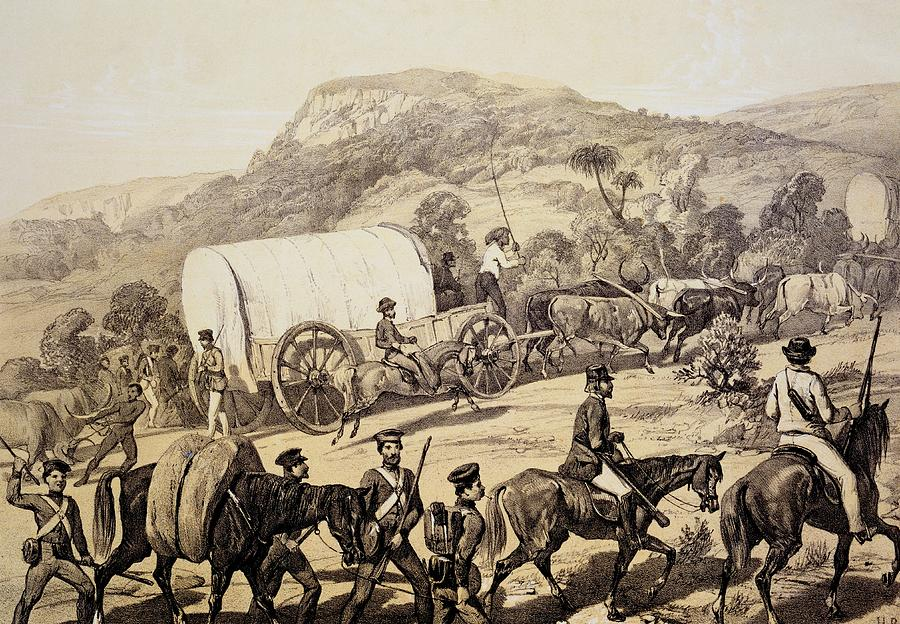 Kaffir Drawing - A Convoy Of Wagons by English School