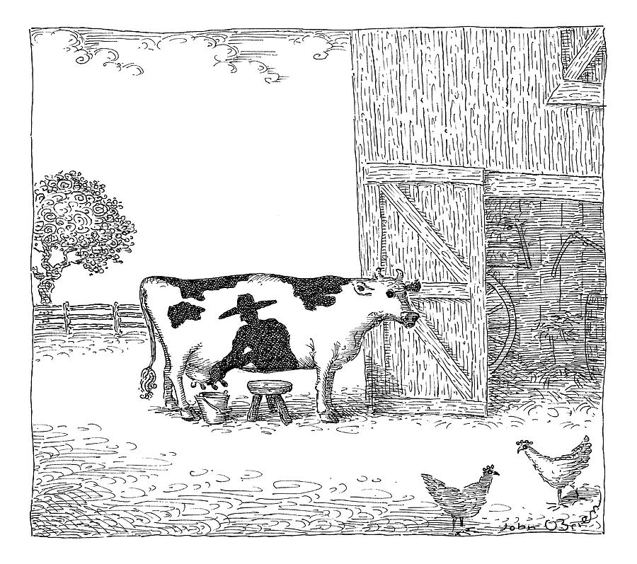 A Cow Has A Spot That Looks Like A Farmer Drawing by John OBrien