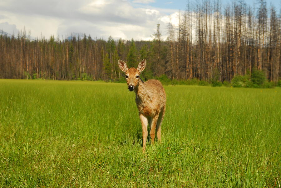 Wilderness Photograph - A Curious Friend by Larry Moloney