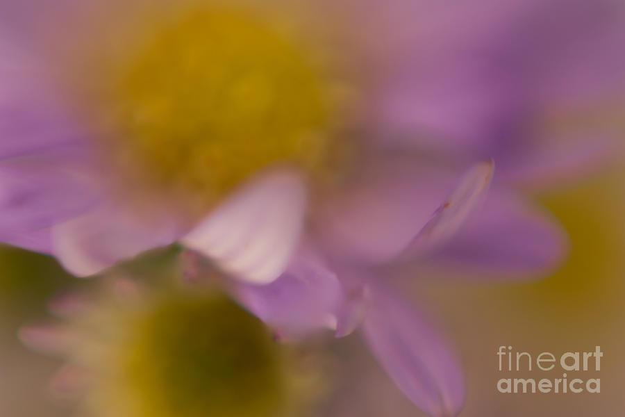 Flower Pyrography - A Curl Of A Petal by Niki Van Velden