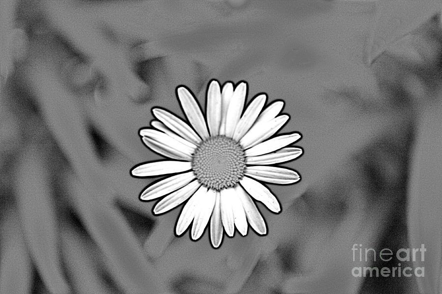 Flower Photograph - A Daisy  by Jay Nodianos