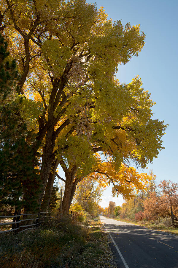 Fall Photograph - A Day For A Daydream by Allen Lefever