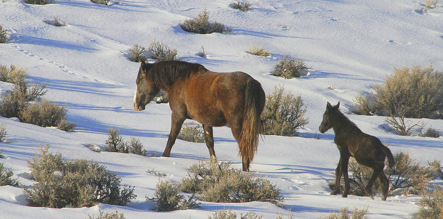 Wild Horses Photograph - A Day In The Life Of  A Wild Horse  by Jeanne  Bencich-Nations