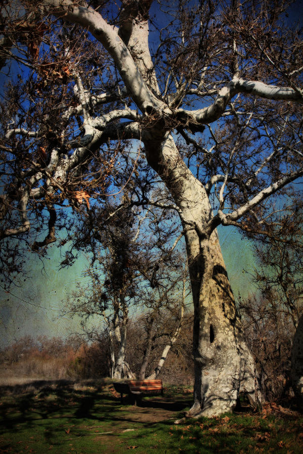 Sycamore Grove Park Photograph - A Day Like This by Laurie Search
