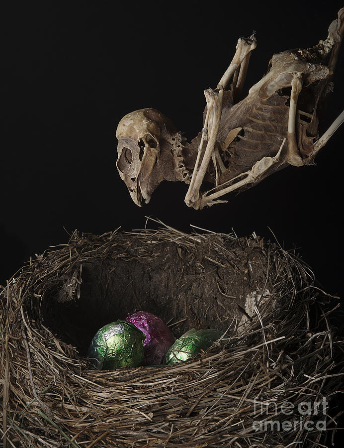 A Dead Bird Flies Into Its Nest Only To Find Chocolate Eggs
