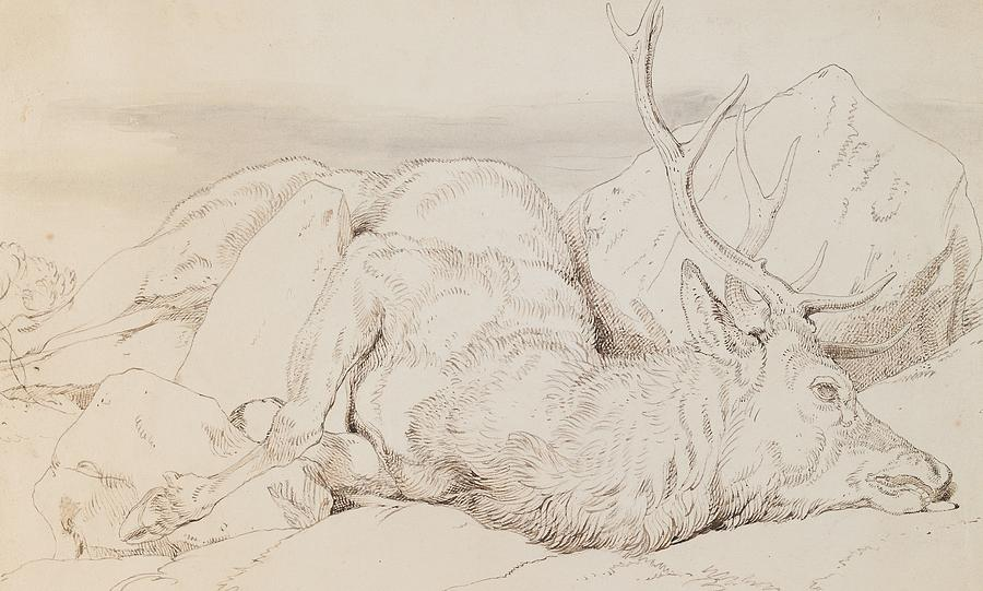C19th Drawing - A Dead Stag by Sir Edwin Landseer