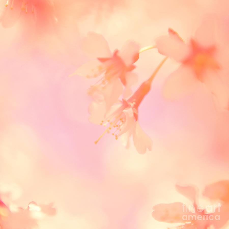 Flower Photograph - A Delicate Sense of Balance by Kim Fearheiley