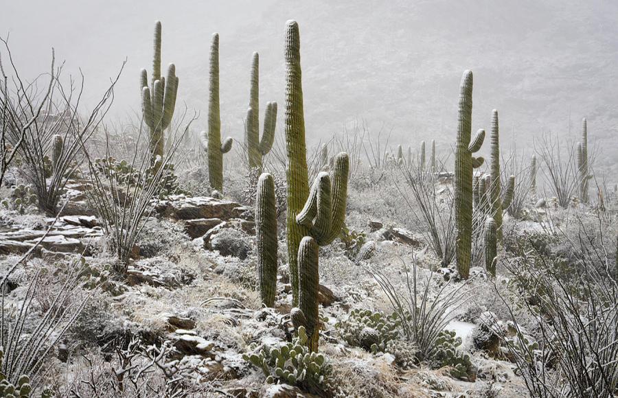 Arizona Photograph - A Desert Blizzard  by Saija  Lehtonen