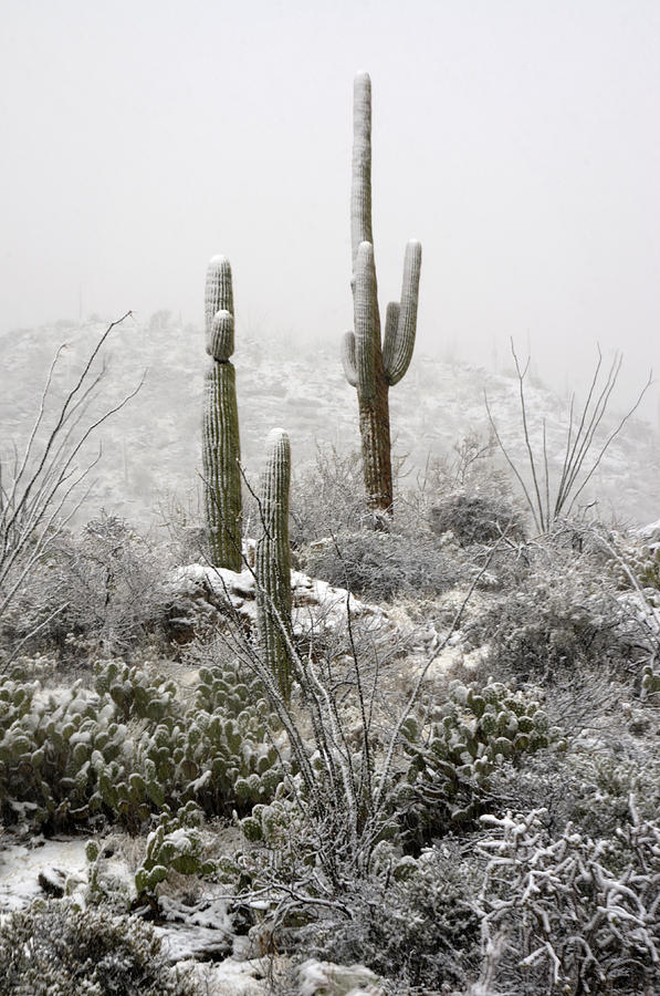 Arizona Photograph - A Desert Snow Day  by Saija  Lehtonen