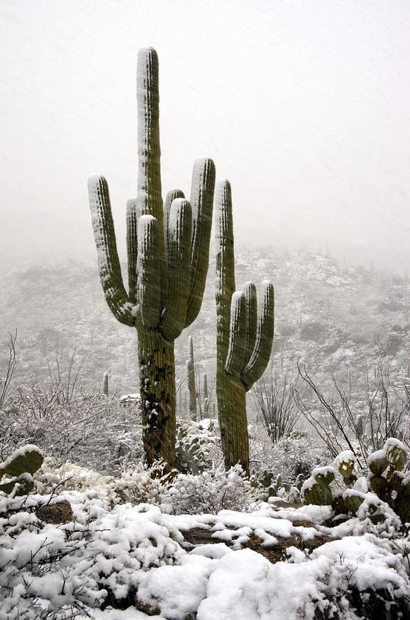 Arizona Photograph - A Desert Southwest Snow Day  by Saija  Lehtonen