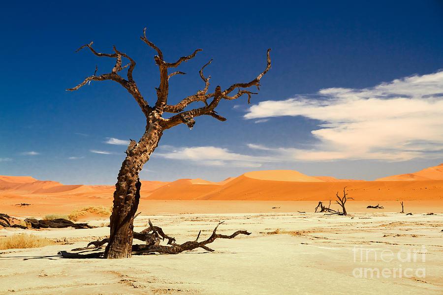 Desert Photograph - A Desert Story by Juergen Klust