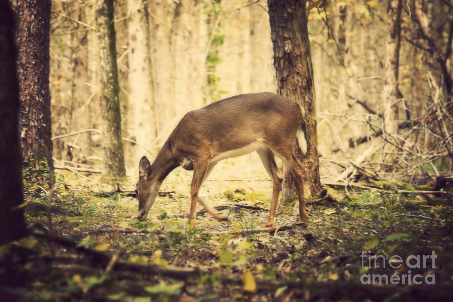 Deer Photograph - A Doe In The Forest by Lena Auxier