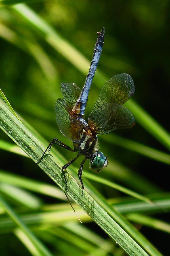 A Dragonfly Photograph by Raymond Salani III