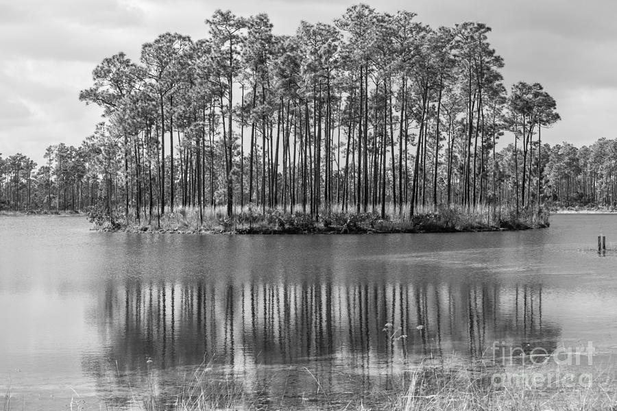Everglades National Park Photograph - A Dream Of Fantasy Island by Rene Triay Photography