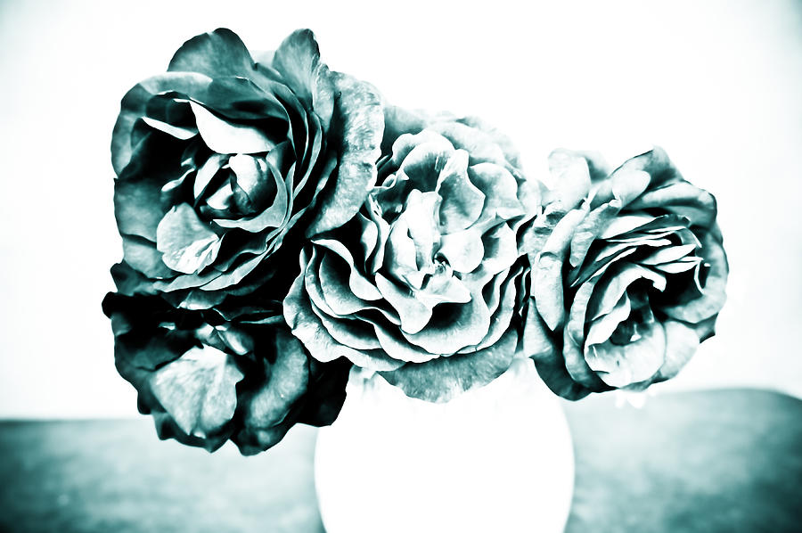 Black Photograph - A Dream Of Roses by Ronda Broatch