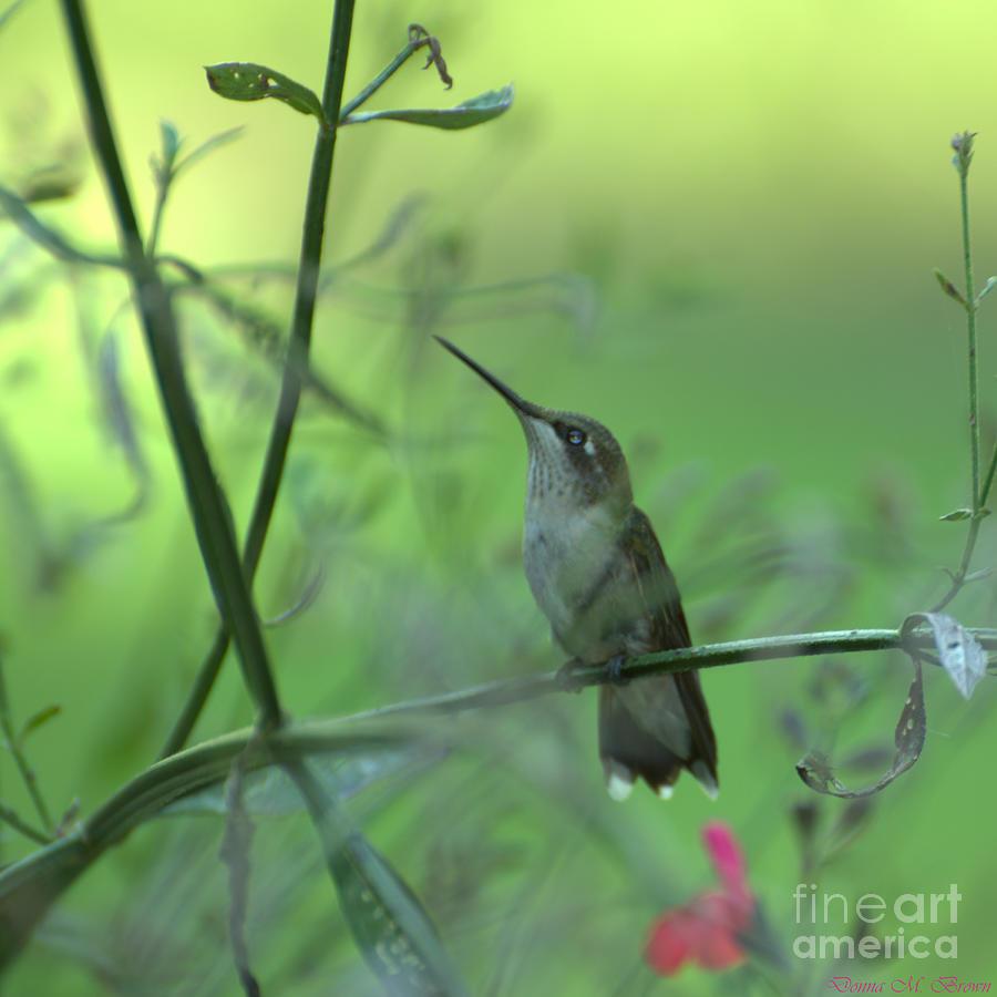 Bird Photograph - A Dreamer  by Donna Brown