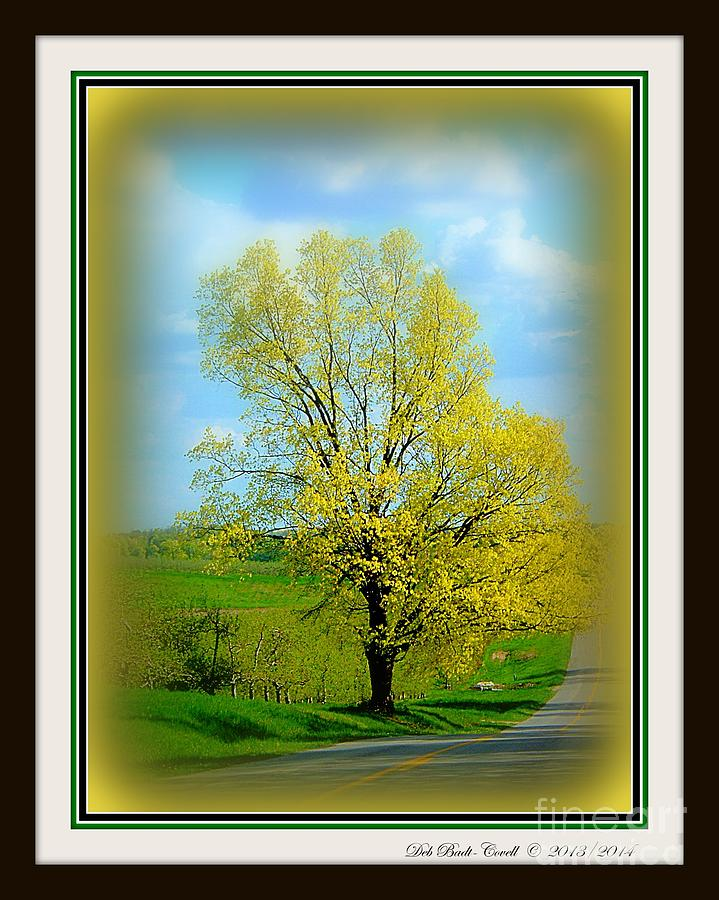 Country Photograph - A Drive In The Country by Deb Badt-Covell