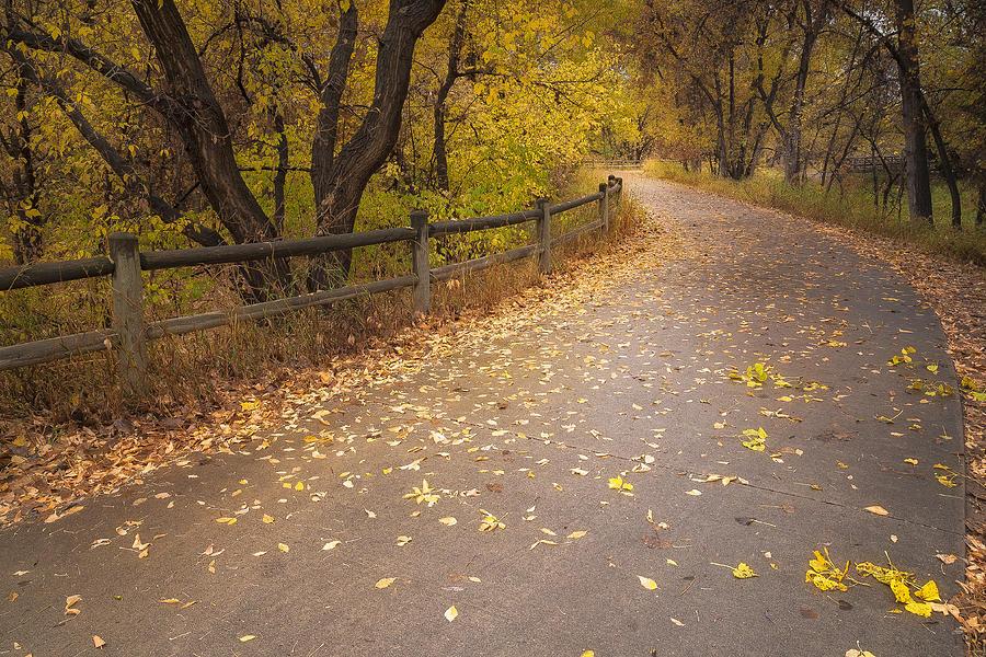 Fall Photograph - A Fall Walk by Michael Van Beber