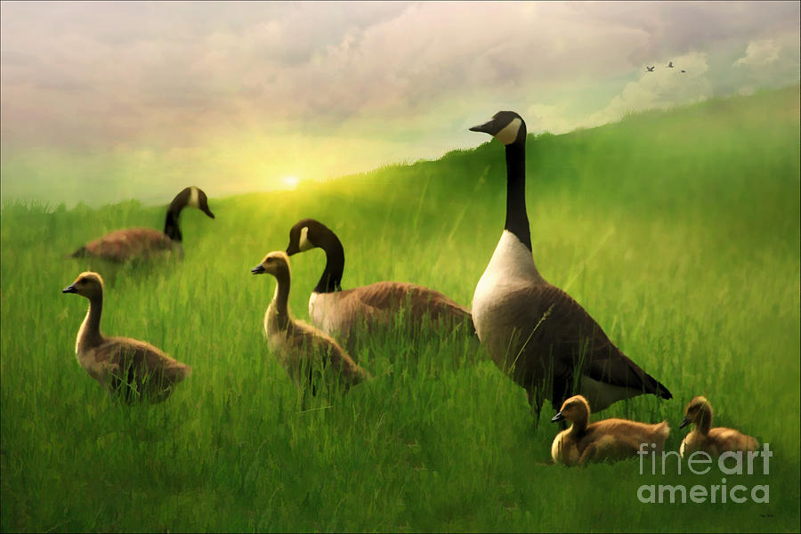Animals Photograph - A Family Gathering by Tom York Images