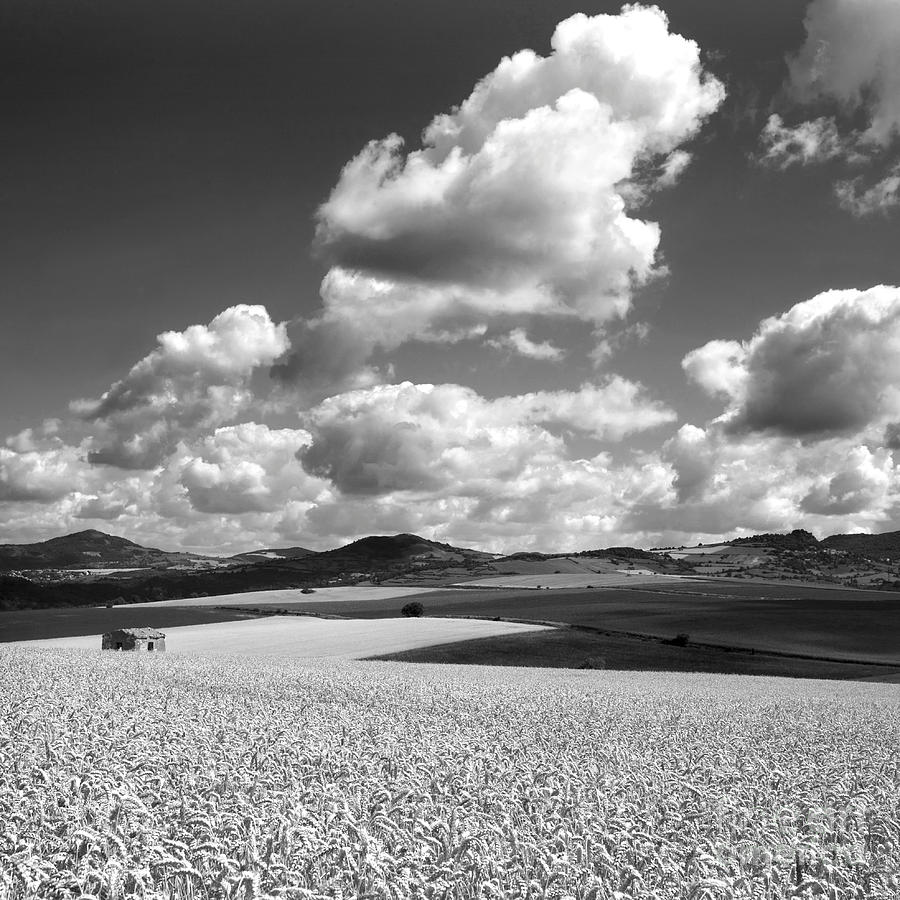 Agriculture Photograph - A Field Of Wheat. Limagne. Auvergne. France by Bernard Jaubert