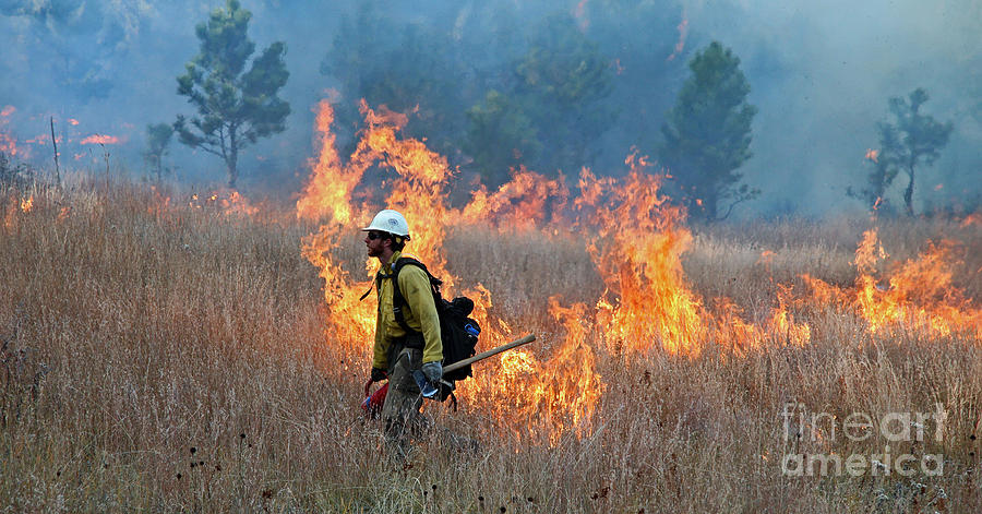 Fire Photograph - A Firefighter Ignites The Norbeck Prescribed Fire. by Bill Gabbert