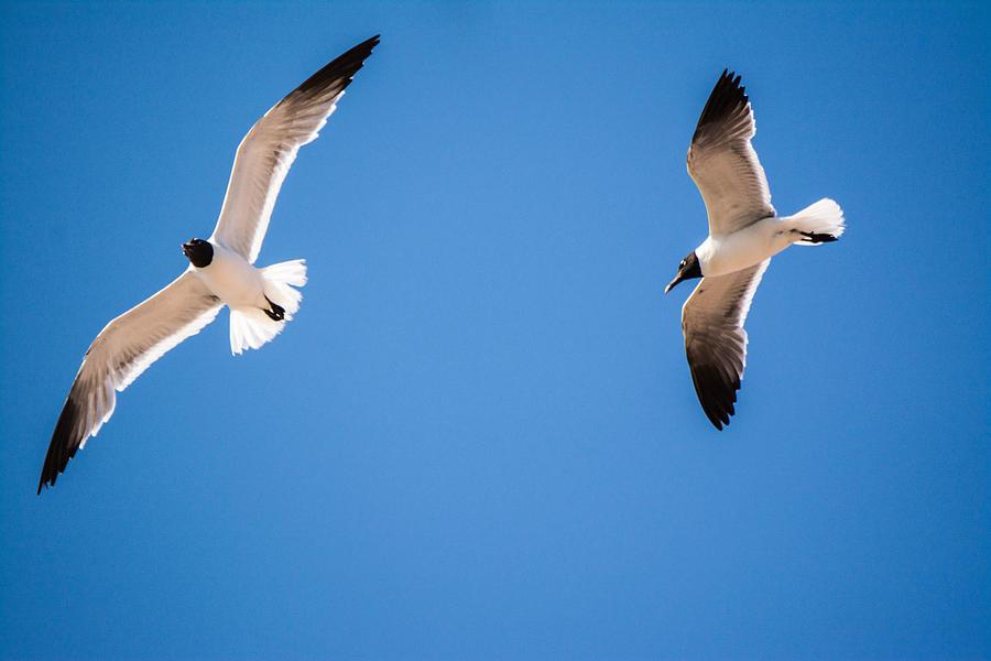 Seagulls Photograph - A Flock Of Seagulls by Jason Brow