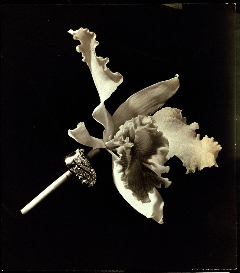 A Flower Being Held By A Diamond And Platinum Photograph by Lusha Nelson