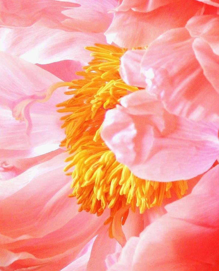 Abstract Flower Photograph - A Flower Effect by Stephanie Callsen