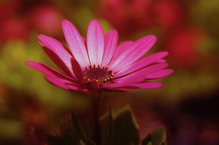 Flowers Photograph - A Flower In A Shadow  by Jeff Swan