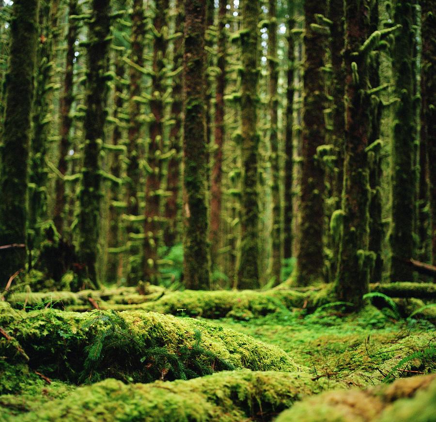 A Forest Of Moss Photograph by Danielle D. Hughson