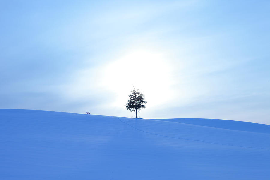 A Fox And A Tree In Snow Field Photograph by Ichiro