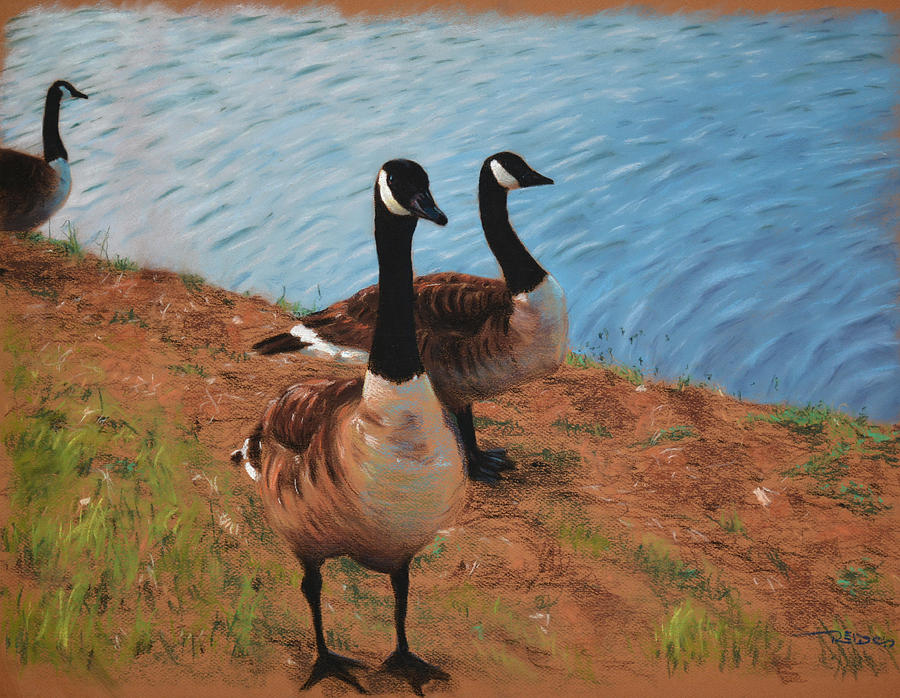 Animal Painting - A Gaggle Of Ganders by Christopher Reid