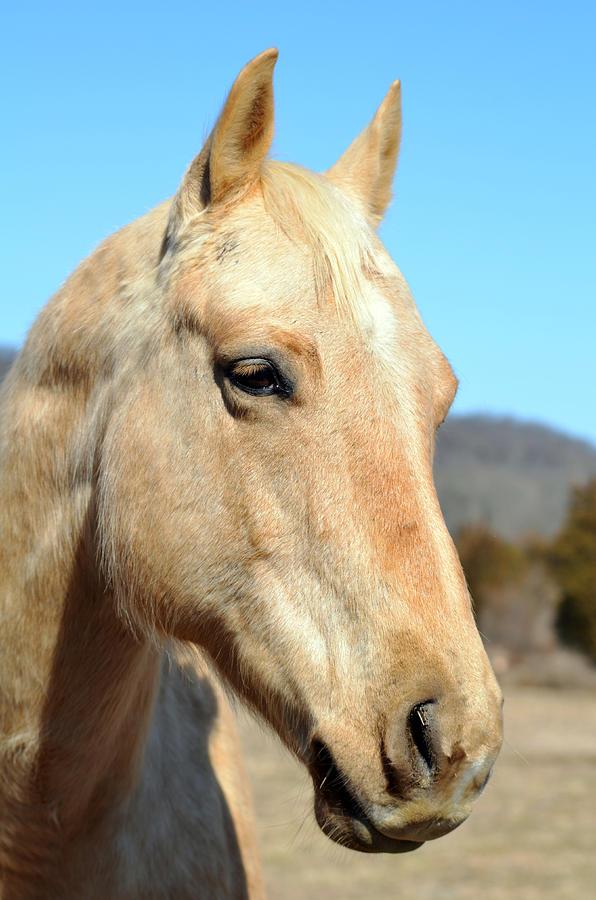 Horse Photograph - A Gentle Soul by Lori Tambakis