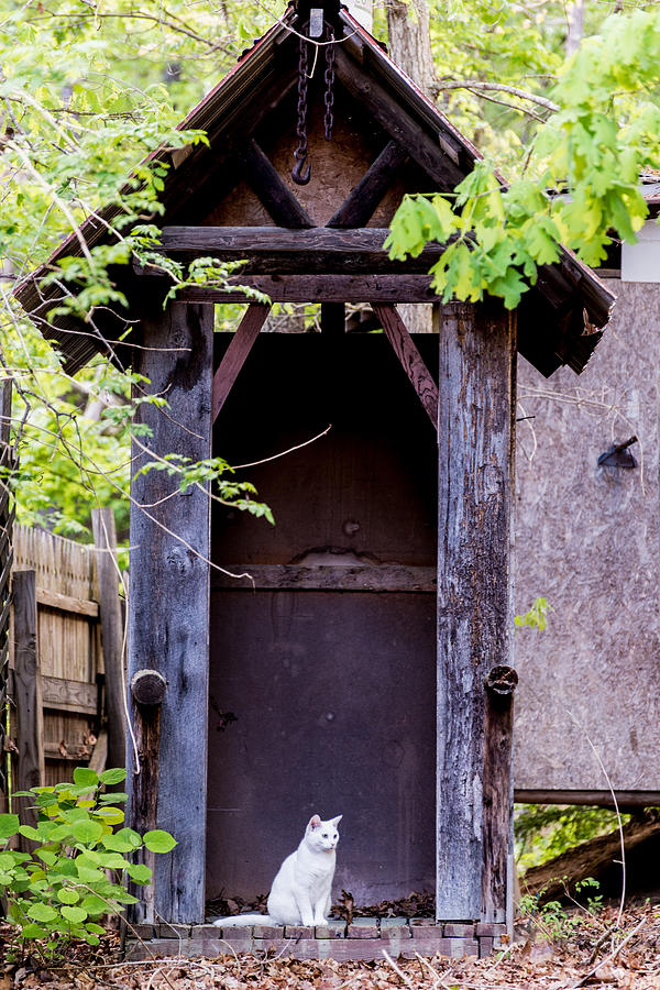 Animal Photograph - A Ghost In The Potting Shed by John Carroll