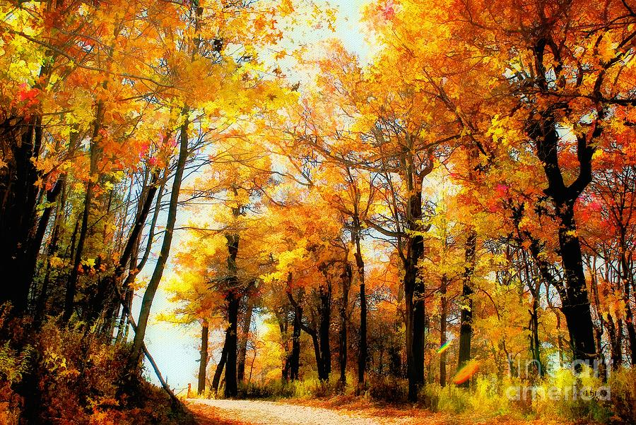 Autumn Leaves Photograph - A Golden Day by Lois Bryan